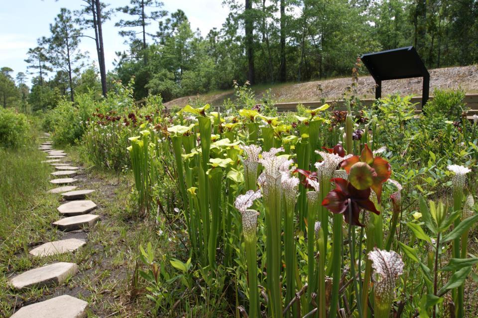 Piney Ridge Nature Preserve | City of Wilmington, NC
