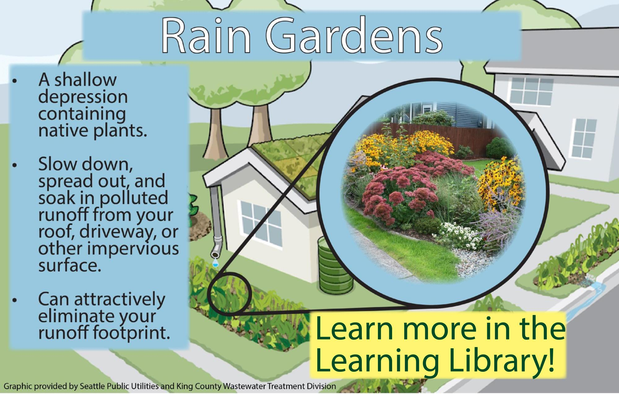 Rain Garden Benefits Infographic