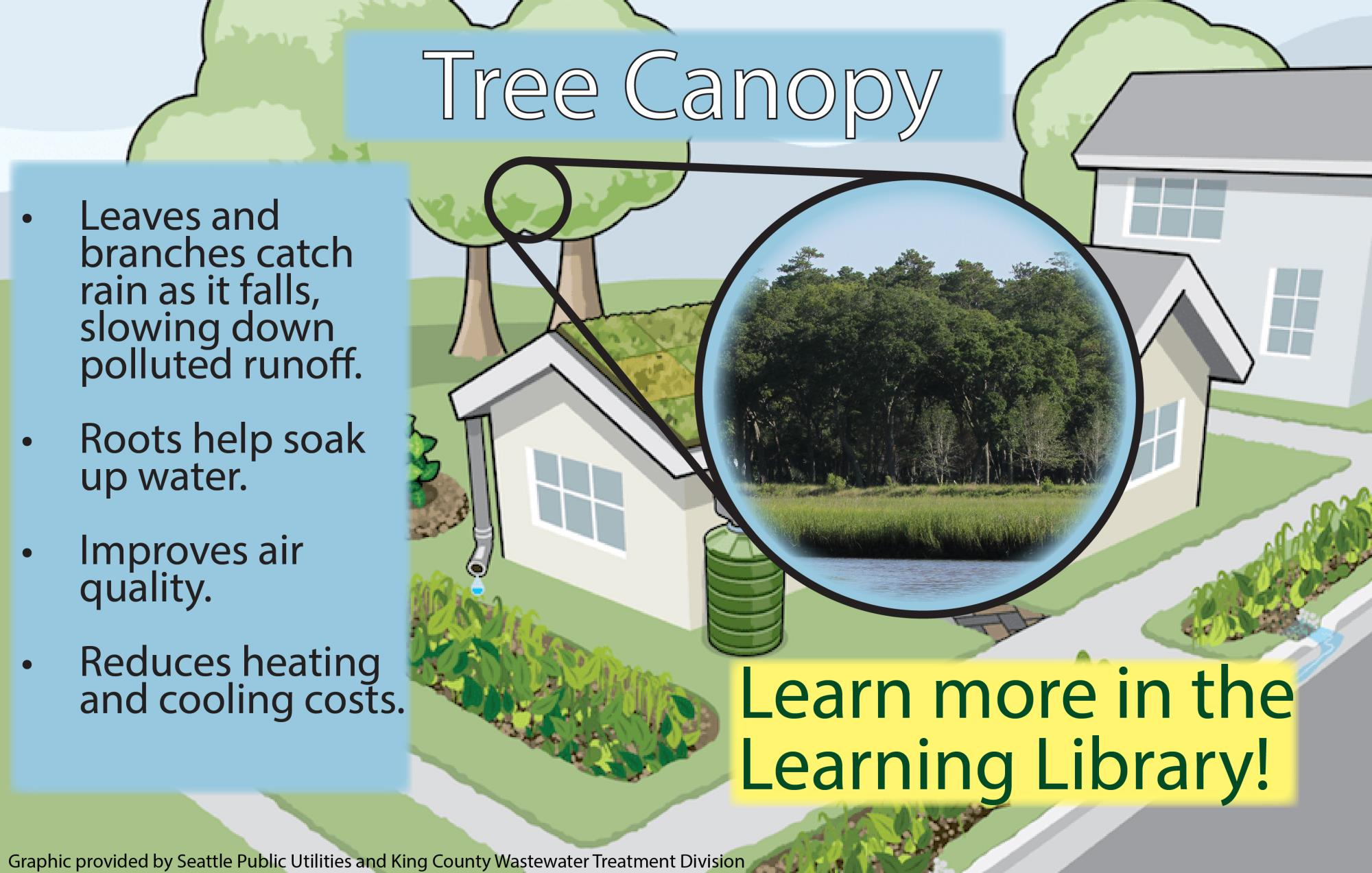 Tree Canopy Benefits Infographic
