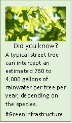 Tree Factoid