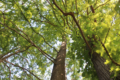 Tree Commission seeks nominations for Tree Awards