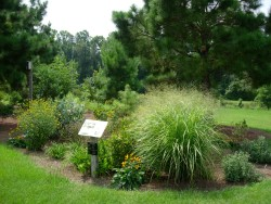 Randall Rain Garden